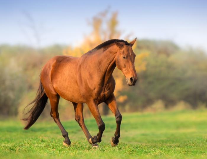 Equine Liability Insurance